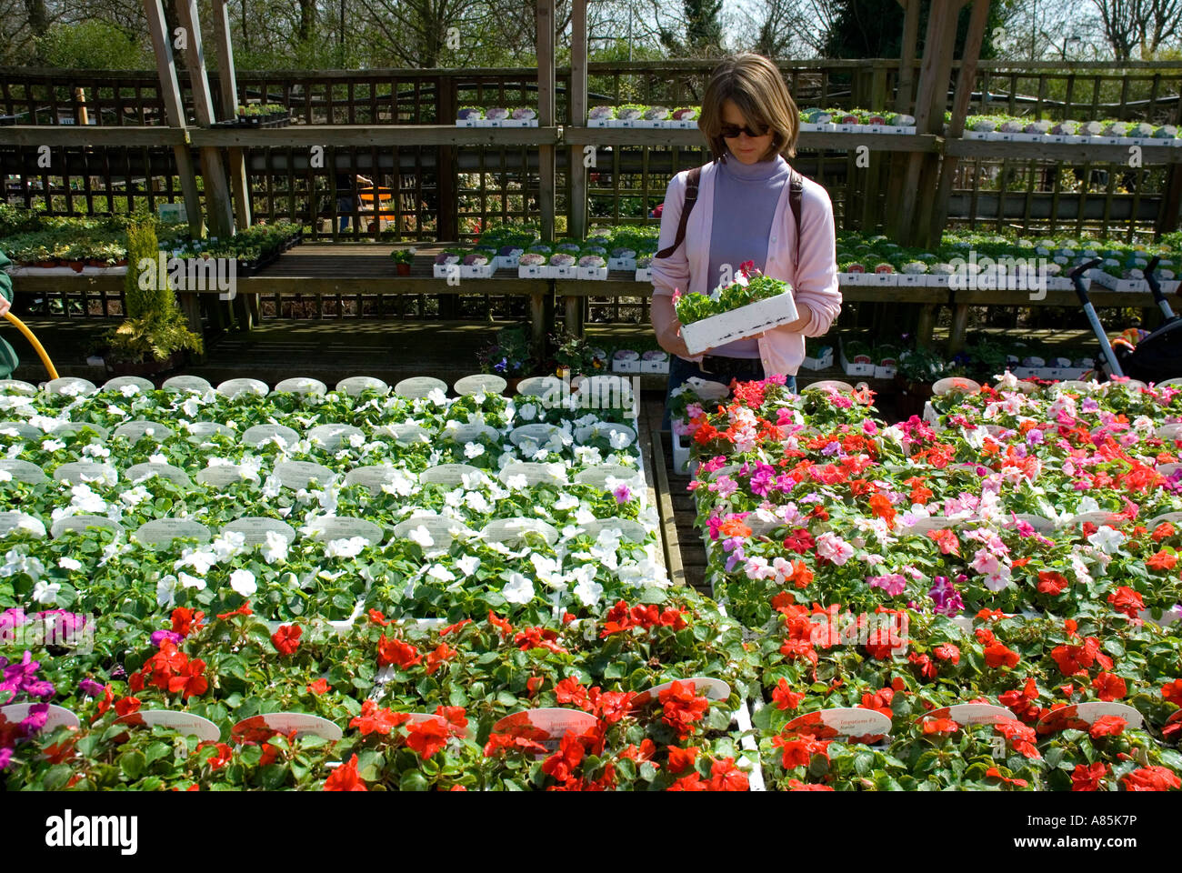 Garden Centre: Woman Choosing Bedding Plants At A London Garden Centre