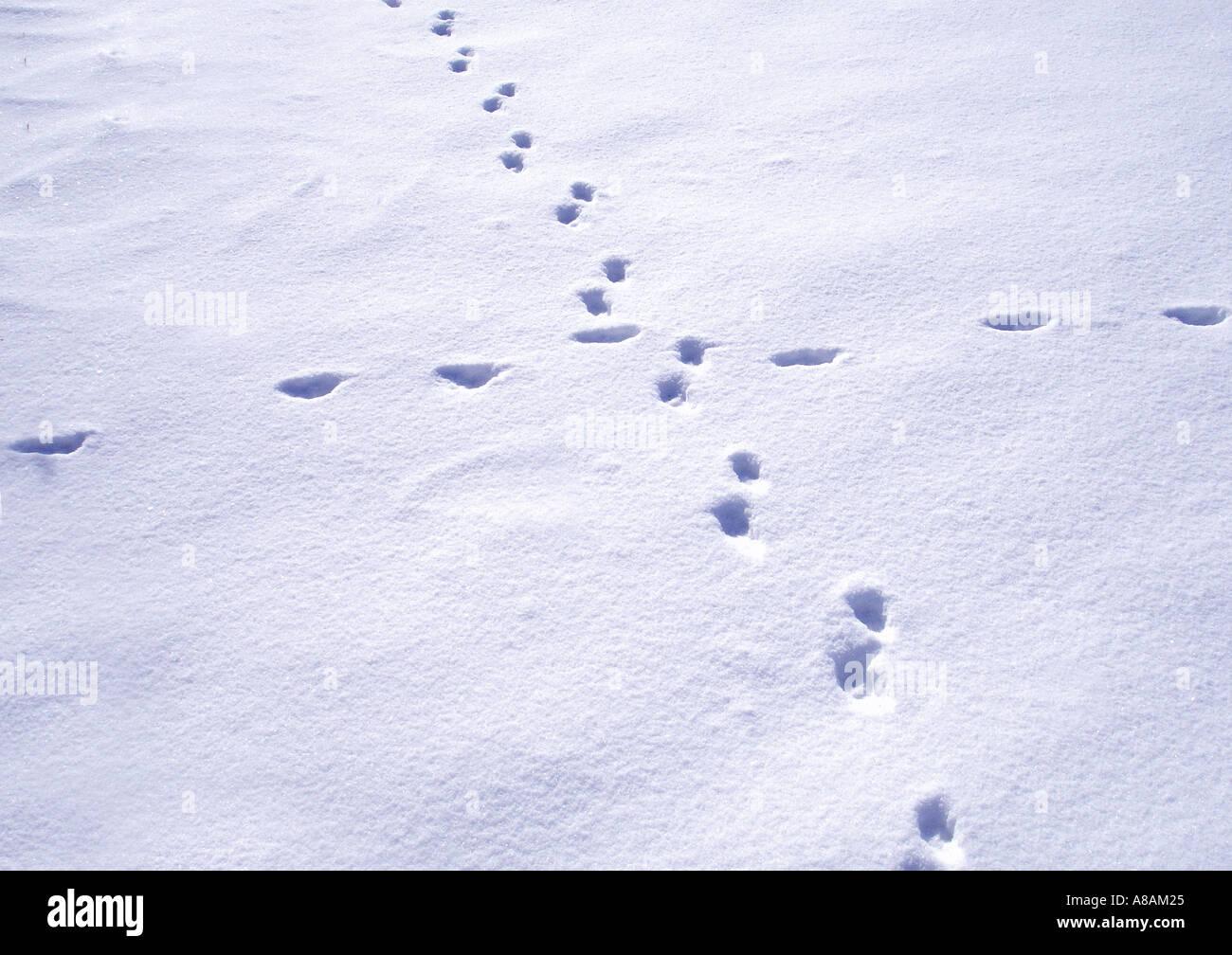 animal footprints in the snow tierspuren im schnee stock photo royalty free image 3931172 alamy. Black Bedroom Furniture Sets. Home Design Ideas