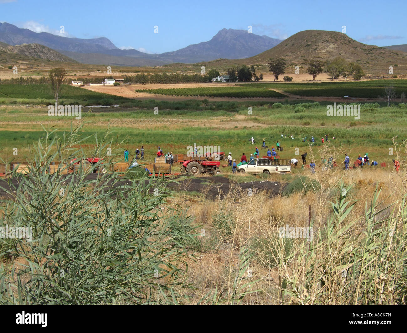 Mcgregor South Africa  city photos gallery : Farm Workers Mcgregor Western Cape South Africa Stock Photo, Royalty ...