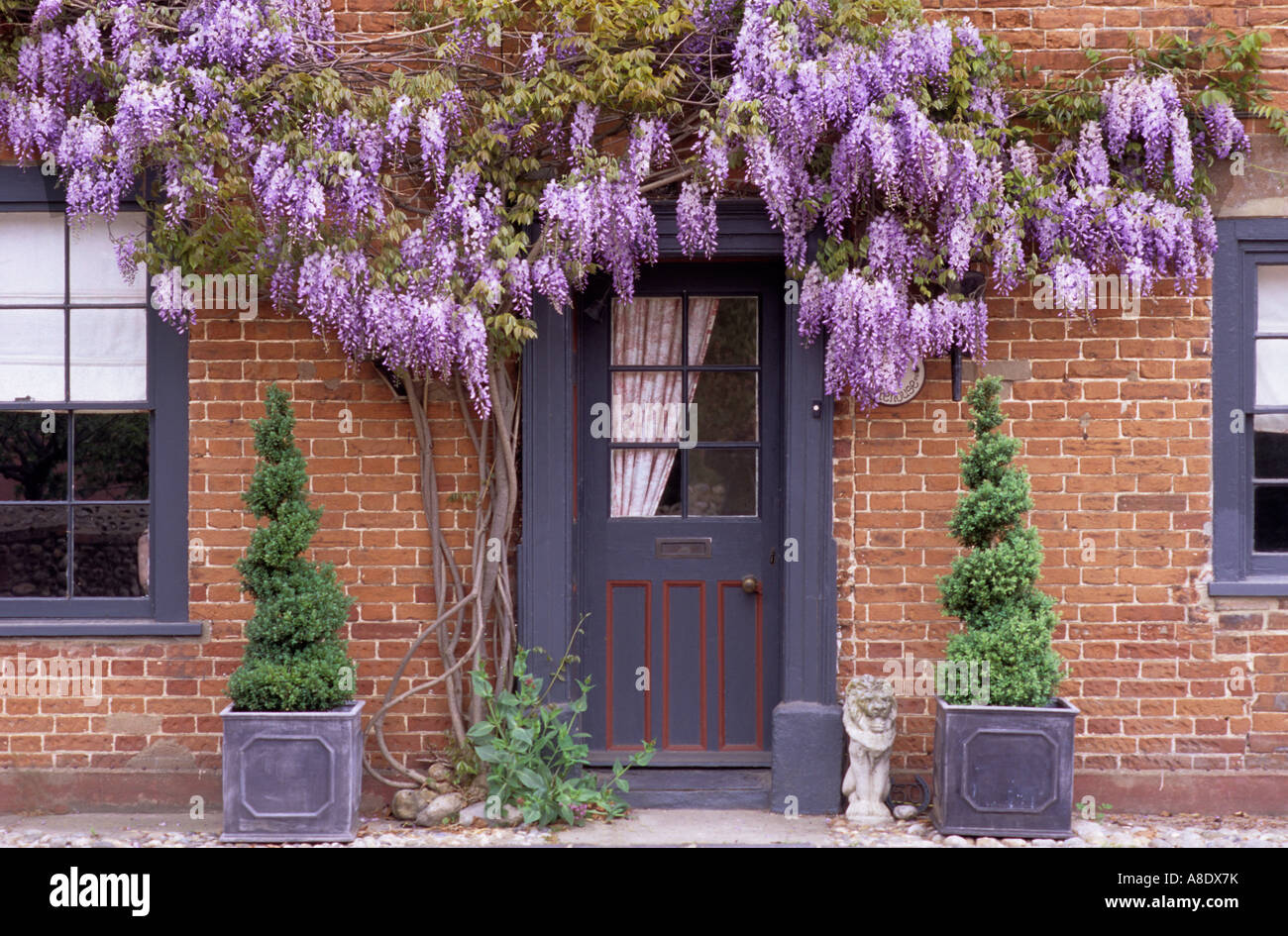 Front Door With Purple Flowered Wisteria House Front