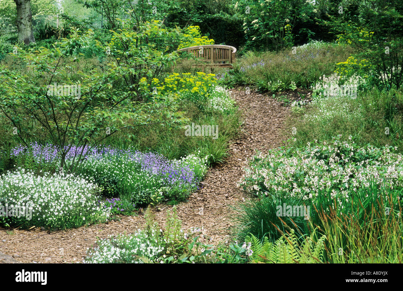 Woodland Garden, Bark, Wood Chip Path, Symphytum, Pulmonaria, Wooden Bench,  Shade Ground Cover, Shady Paths Bench