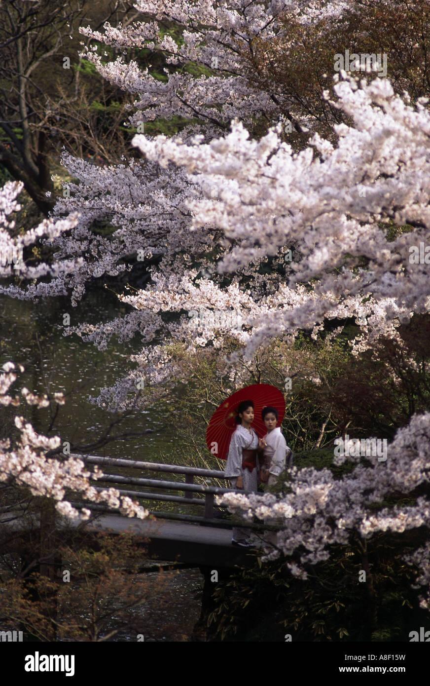 Japanese Garden Cherry Blossom Bridge geography / travel, tokyo, garden / parks, korakuen park, cherry