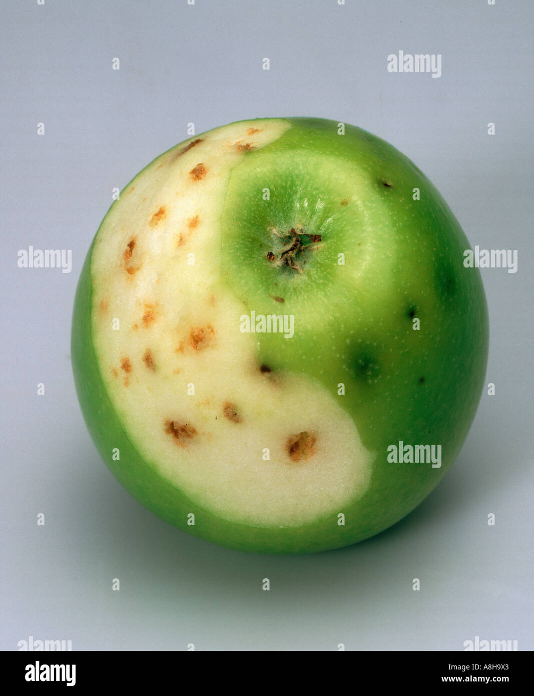 Partly peeled apple showing bitter pit a symptom of calcium Stock ...
