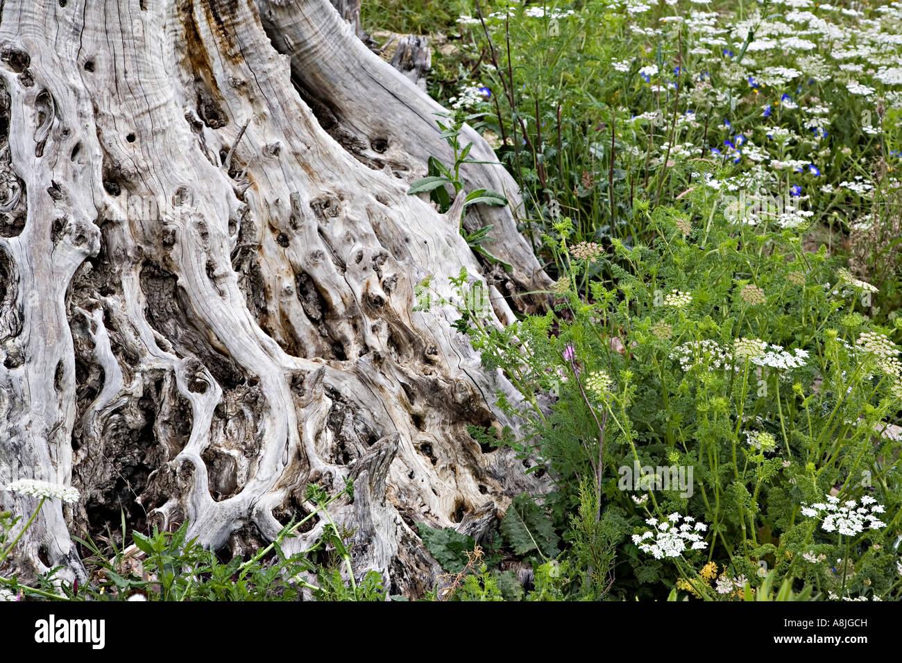 Dead Tree Stump In Field Of Wild Flowers Spain Europe