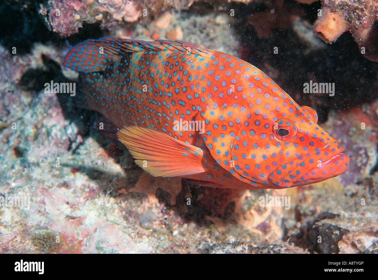Australia Wildlife Queensland Great Barrier Reef Fish