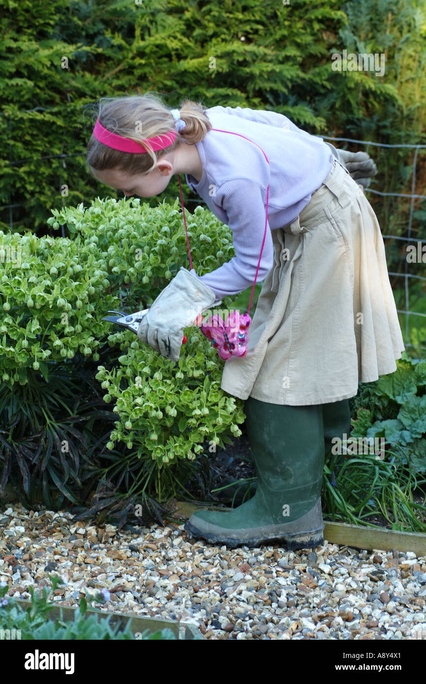 little working with pruning shears and a variety of hellebore