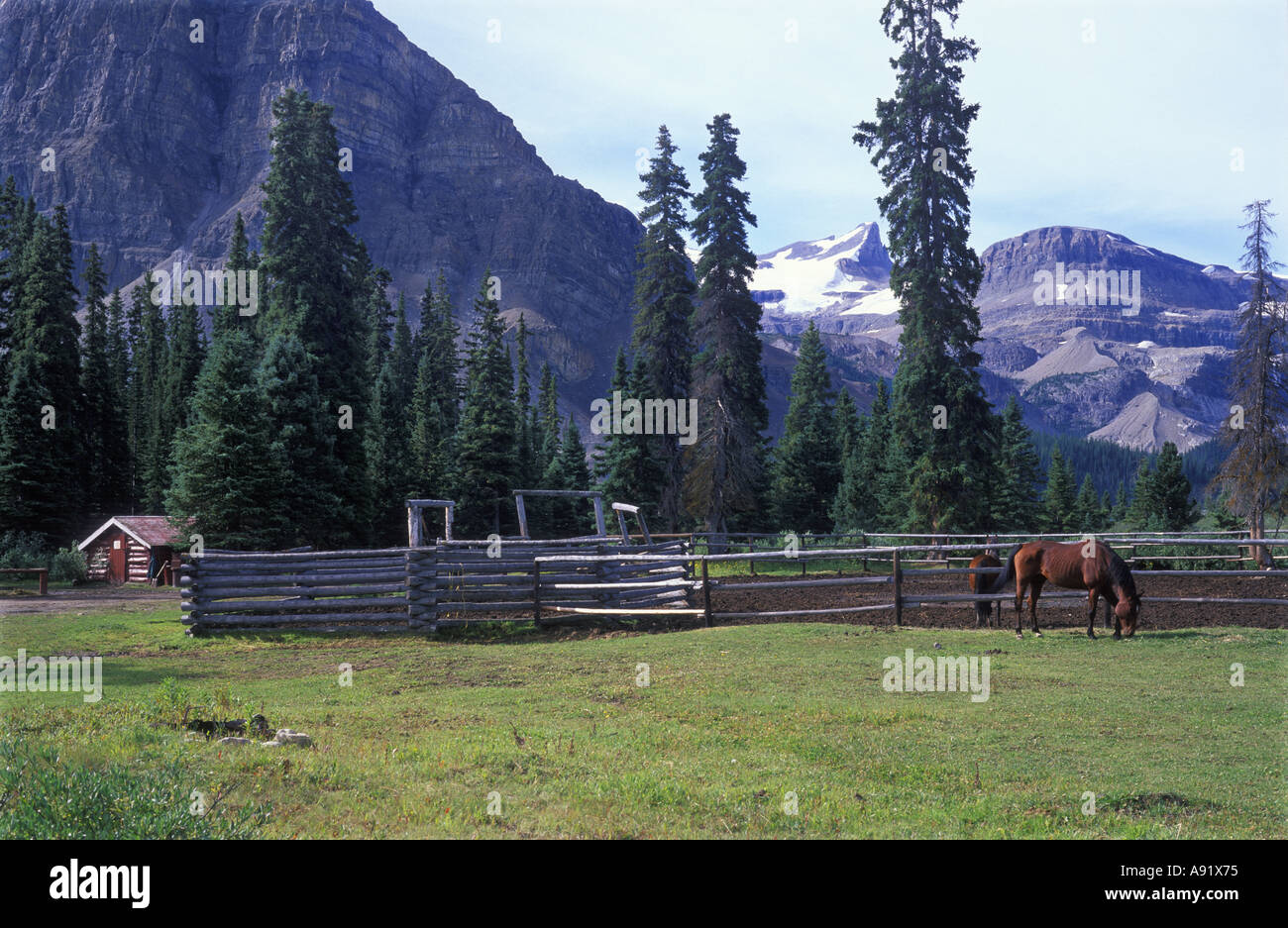 Log Cabin Horse And Corral At Ranch In Banff National