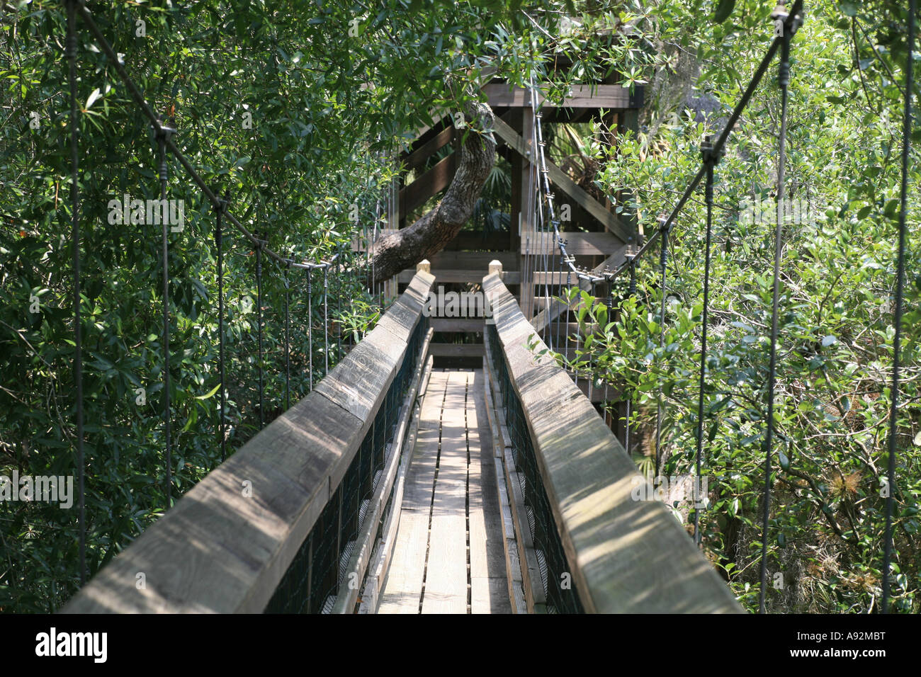 Canopy Walk  In the trees of Myakka River State Park Florida USA.   & Canopy Walk