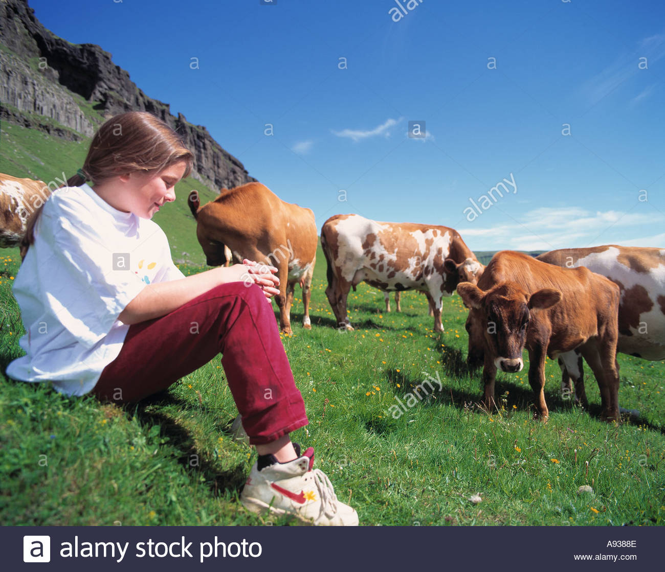 a young watching a group of cows stock photo royalty free