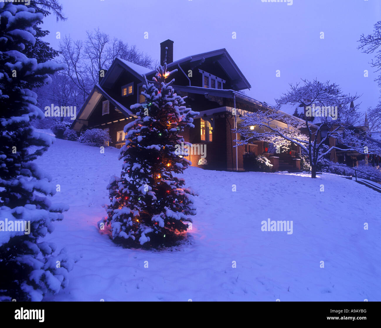 Snow covered christmas tree lights in garden of house