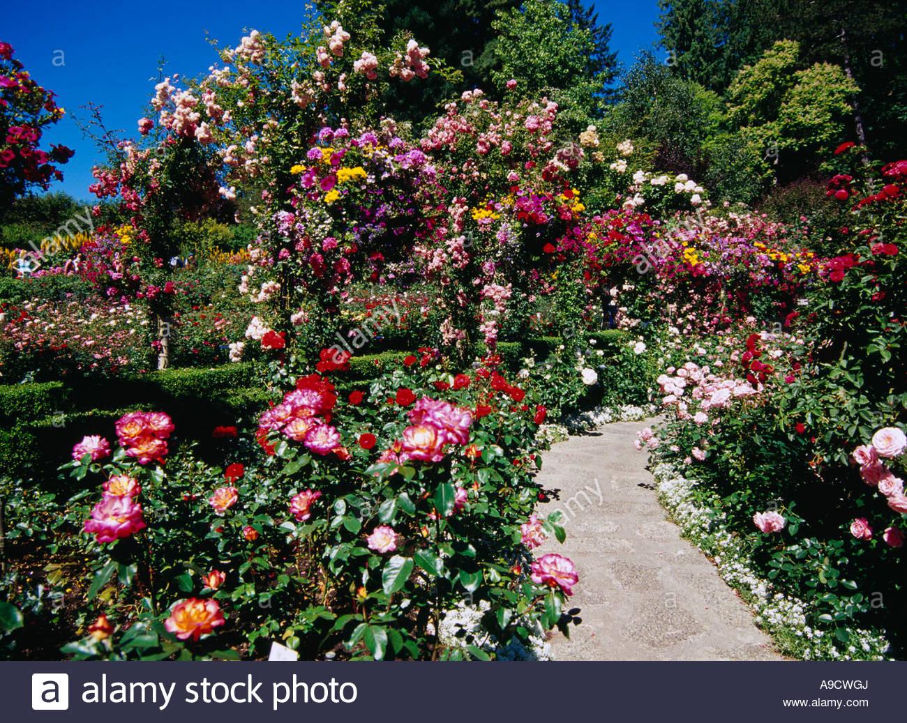 butchart gardens rose garden flower stock photos u0026 butchart