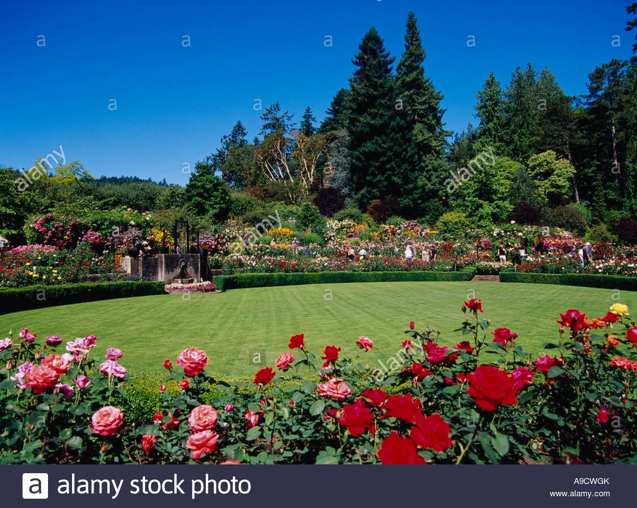 The butchart gardens rose garden flower victoria canada stock the butchart gardens rose garden flower victoria canada thecheapjerseys Choice Image