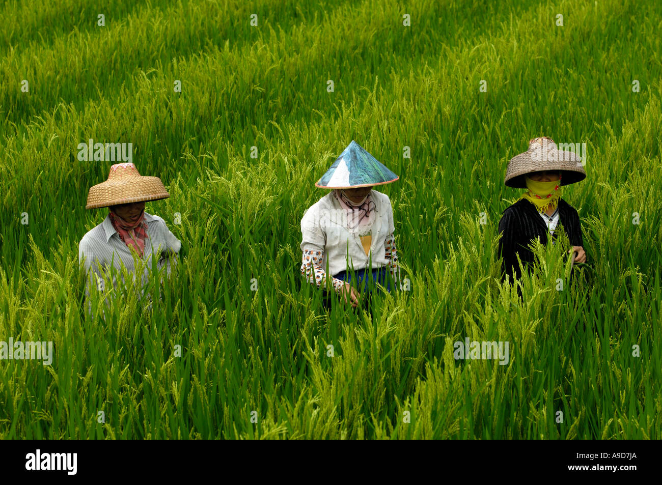 chinese farmers - photo #39