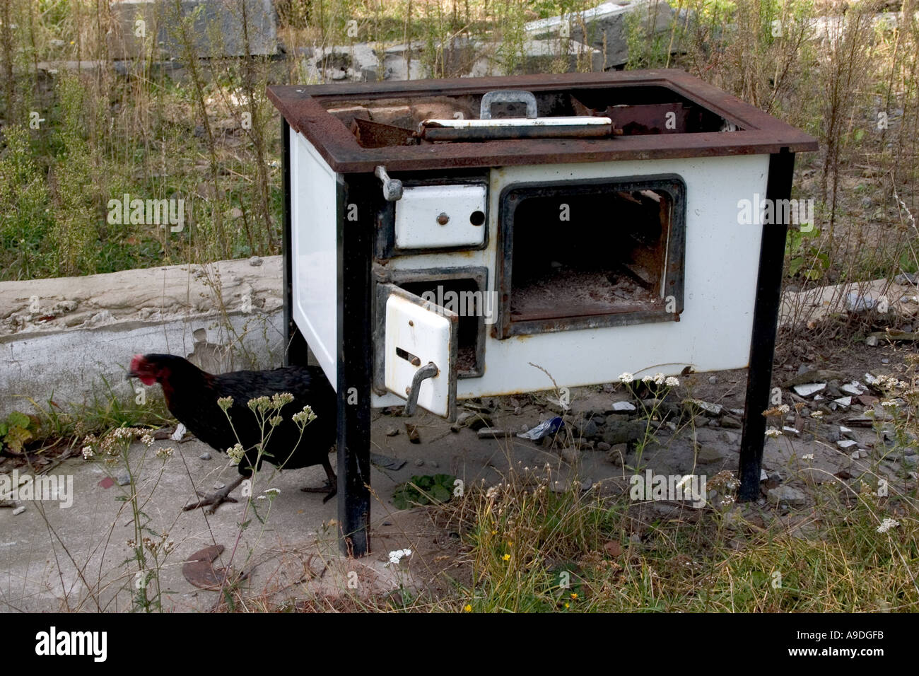 Discarded Polish wood burning cook stove and free range rooster at farm.  Zawady Poland - - Stove Polish Stock Photos & Stove Polish Stock Images - Alamy