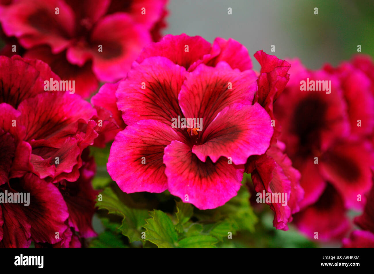 Natural Images Flowers