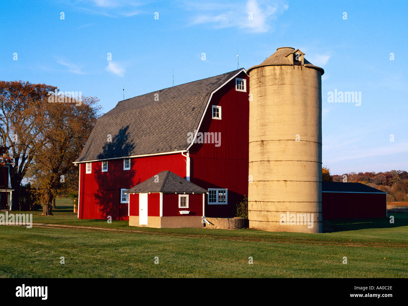Cow on green pasture with red barn with grain silo royalty free stock - Agriculture Red Barn And Silo In Autumn With Green Lawn In The Foreground Waterford