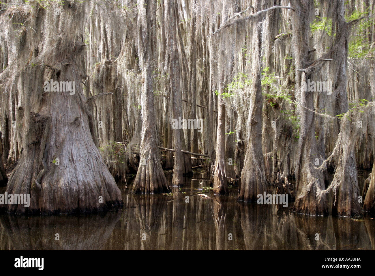 how to say swamp in spanish