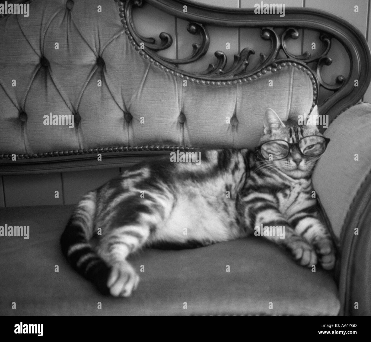 Cats, Glasses, American Short Hair, Stripe, Sofa, Chair, Black And White,  Black, White, Gray, Mono, Tone, Relax, Sleep, Funny