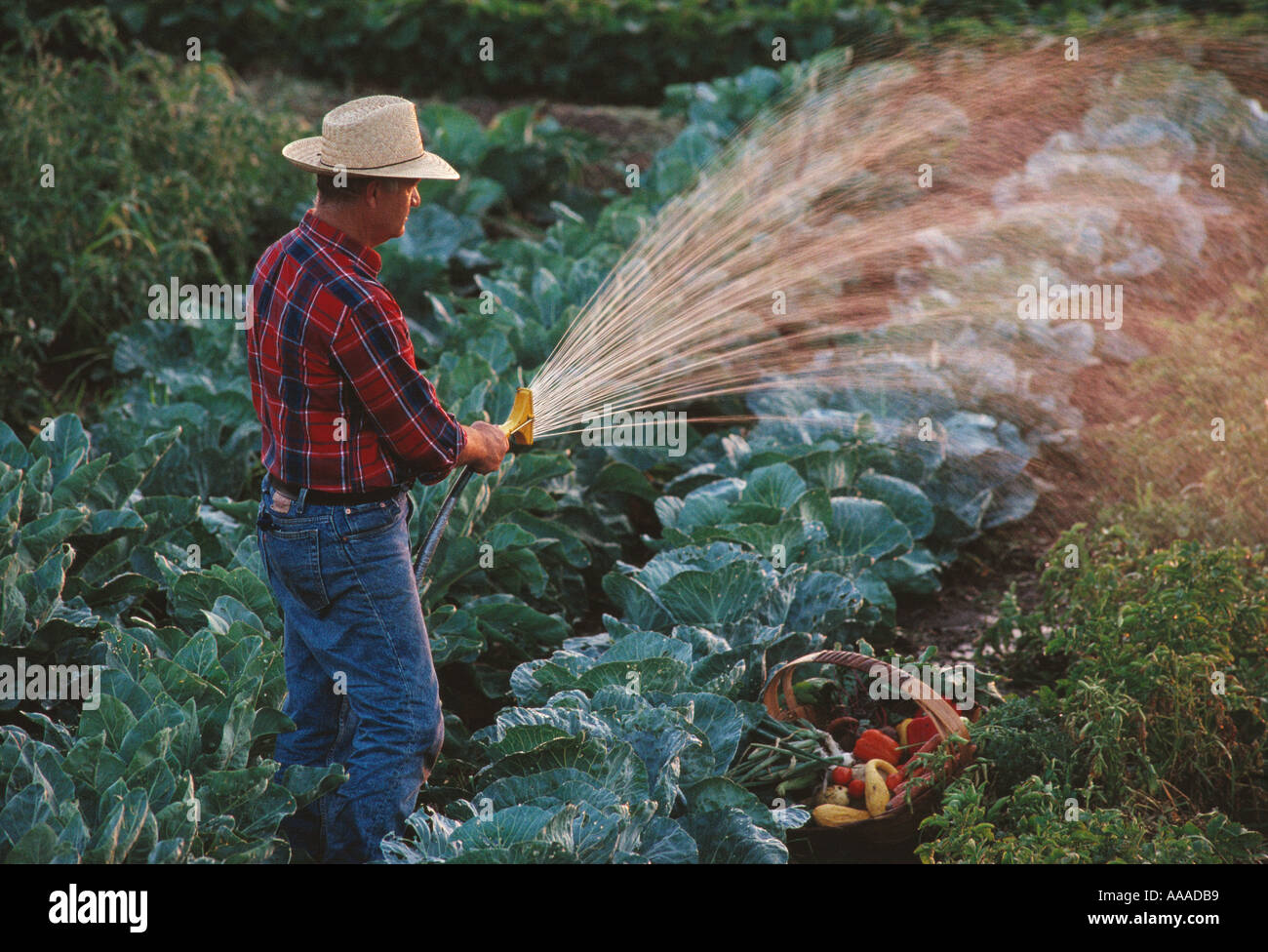 Agriculture farm life a man watering his backyard for Watering vegetable garden