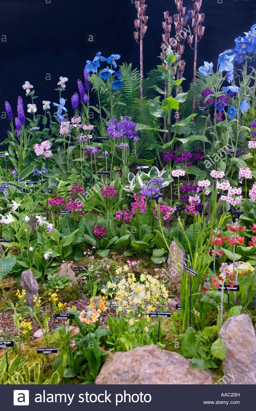 Kevock garden plants stand gardening scotland 2007 best for Garden trees scotland