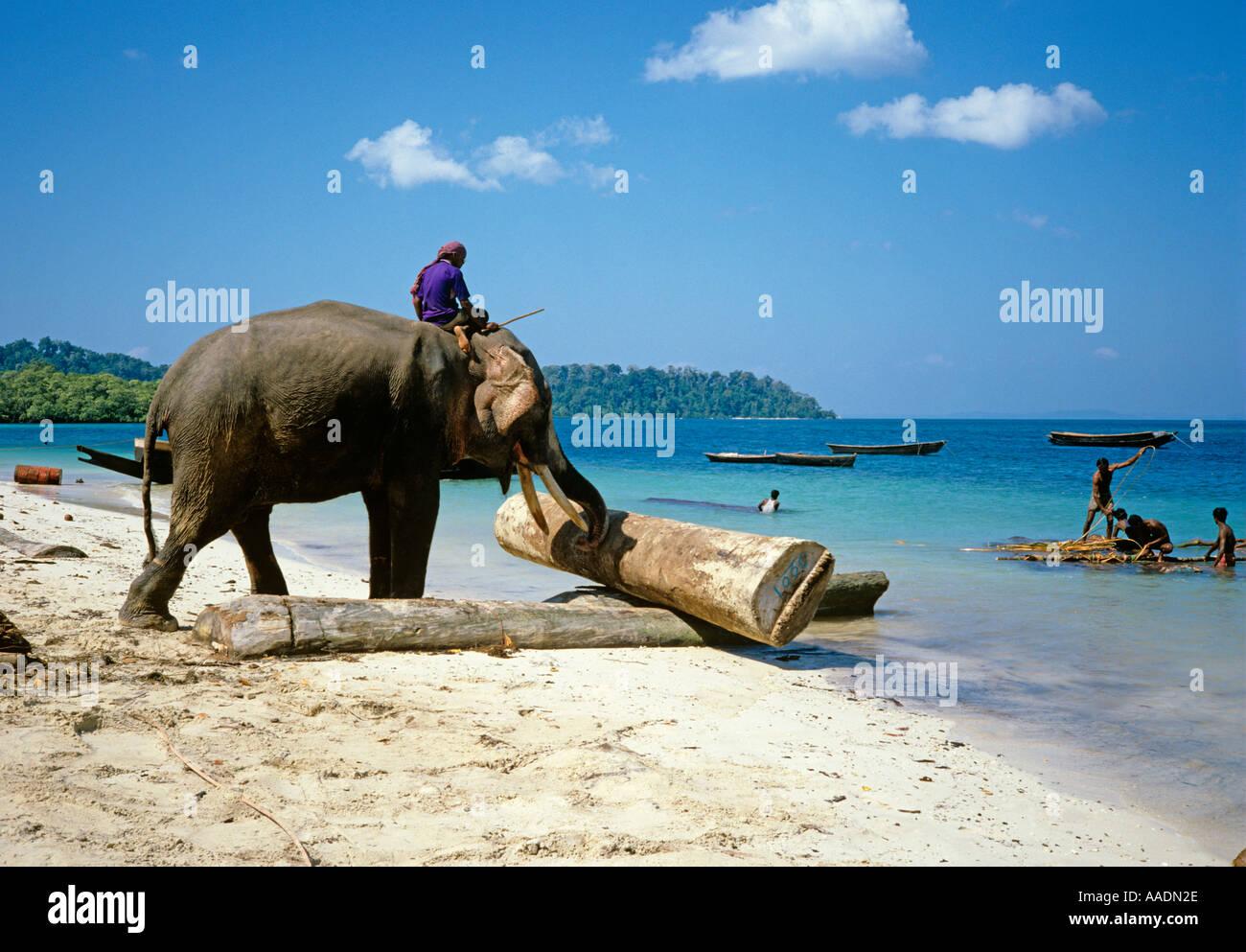 India Andaman Islands Havelock Island Elephant Moving Logs