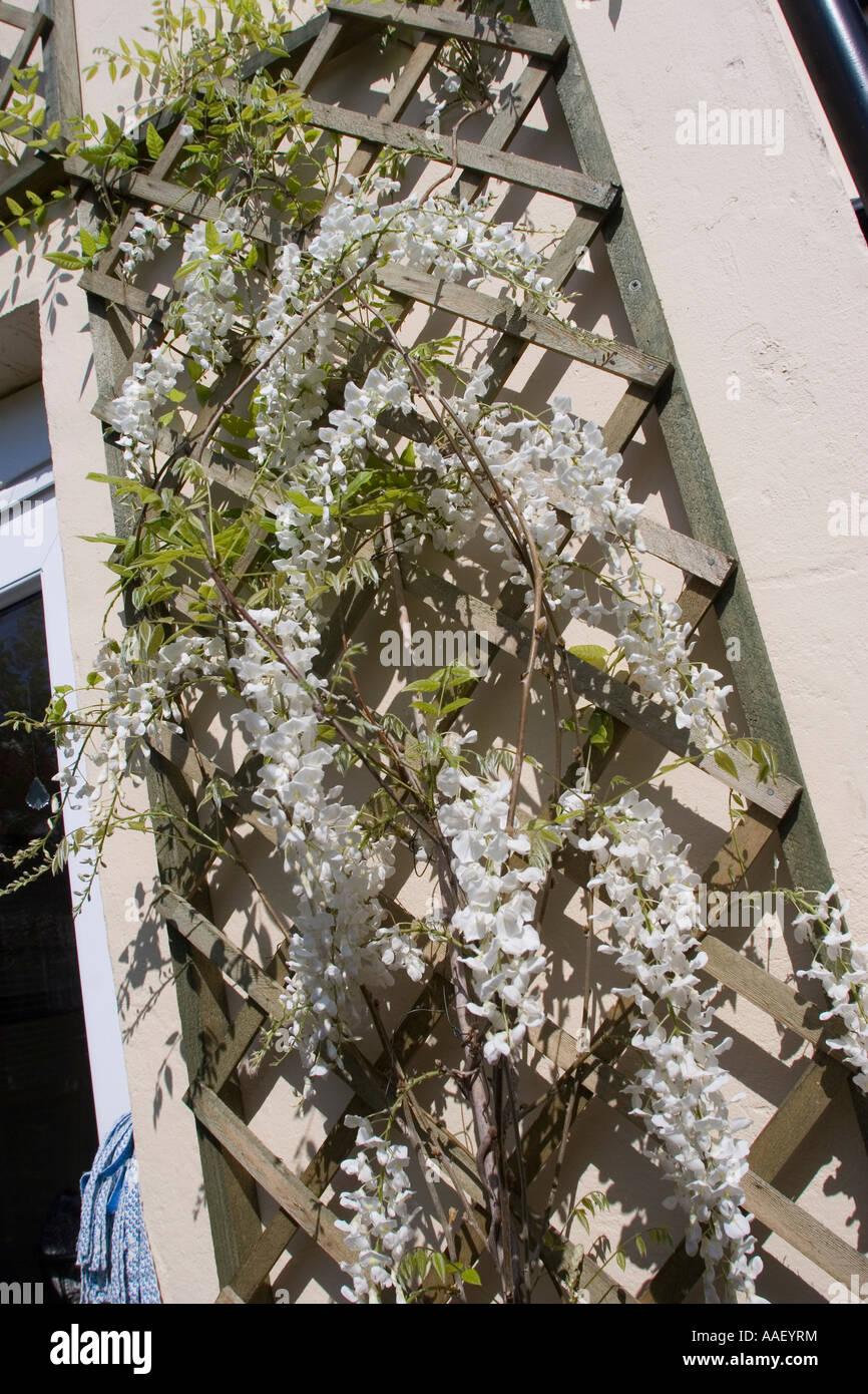 how to make a house plant trellis