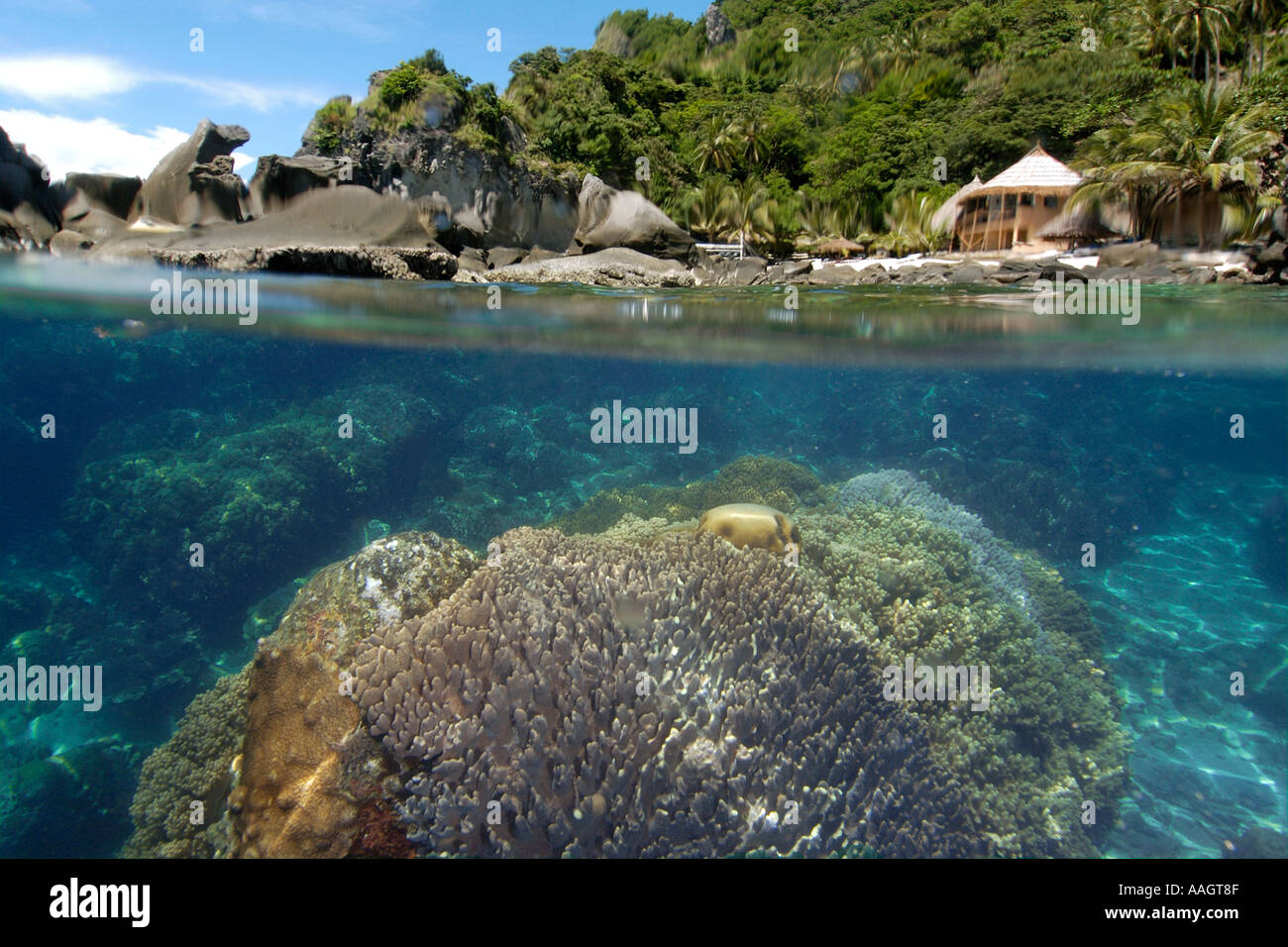 Over Under Image Of Coral Reef And Beach Bungalow Surrounded By Trees Rocks Apo Island Marine Reserve Philippines