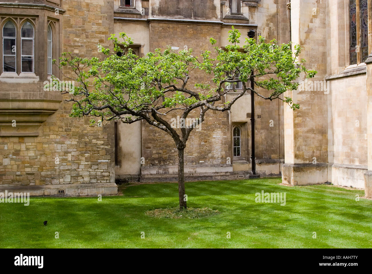 these images will help you understand the words isaac newton apple in detail all images found in the global network and can be used only with