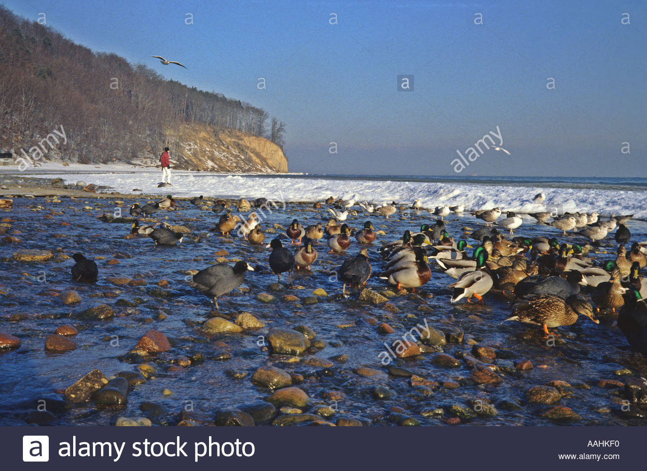 Gdynia Poland  city photos : Gdynia Redlowo In Winter, Poland Stock Photo, Royalty Free Image ...