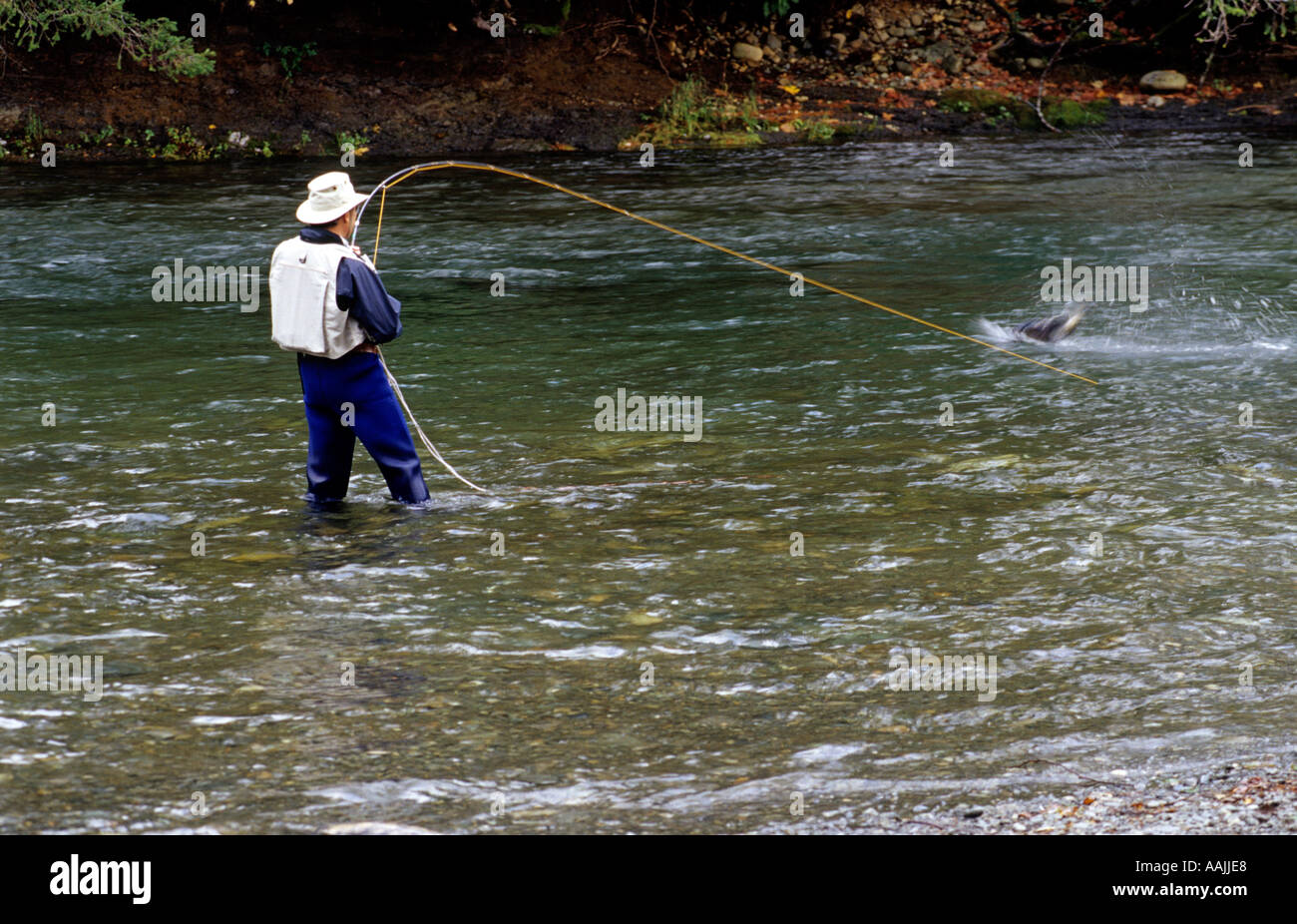 Fishing the puntledge river courtenay vancouver island for Vancouver island fishing