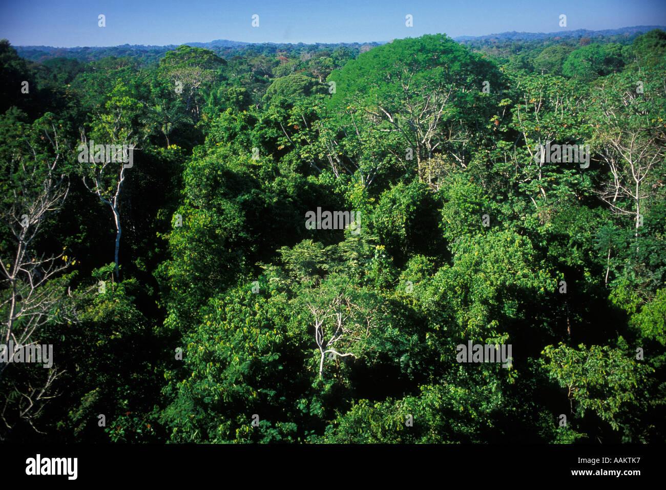 Canopy trees Amazon rainforest at Alta Floresta Mato Grosso State Brazil & Canopy trees Amazon rainforest at Alta Floresta Mato Grosso ...