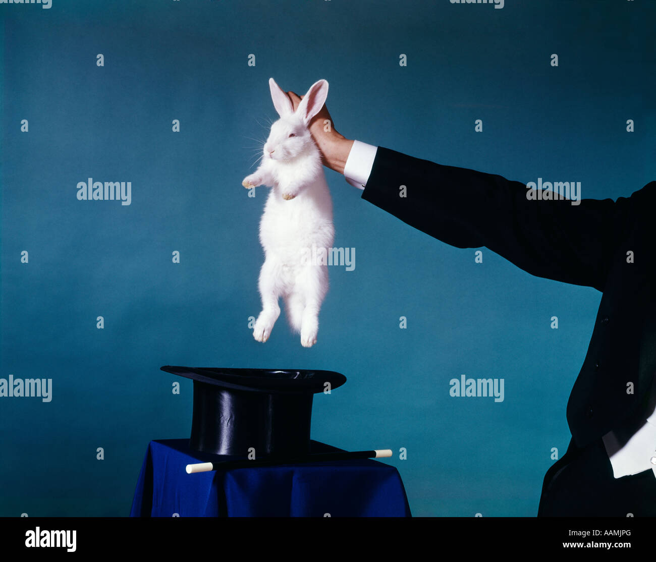 HAND OF MAGICIAN PULLING WHITE RABBIT OUT OF BLACK TOP HAT ...