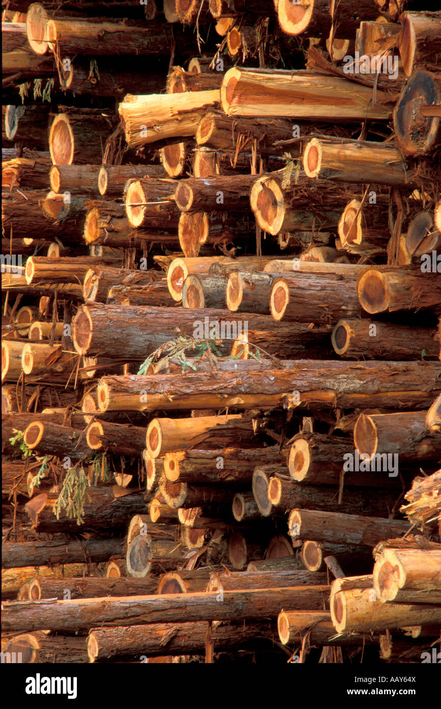 Cut Wood Logs ~ Cut lumber logs at mill with redwood trees from
