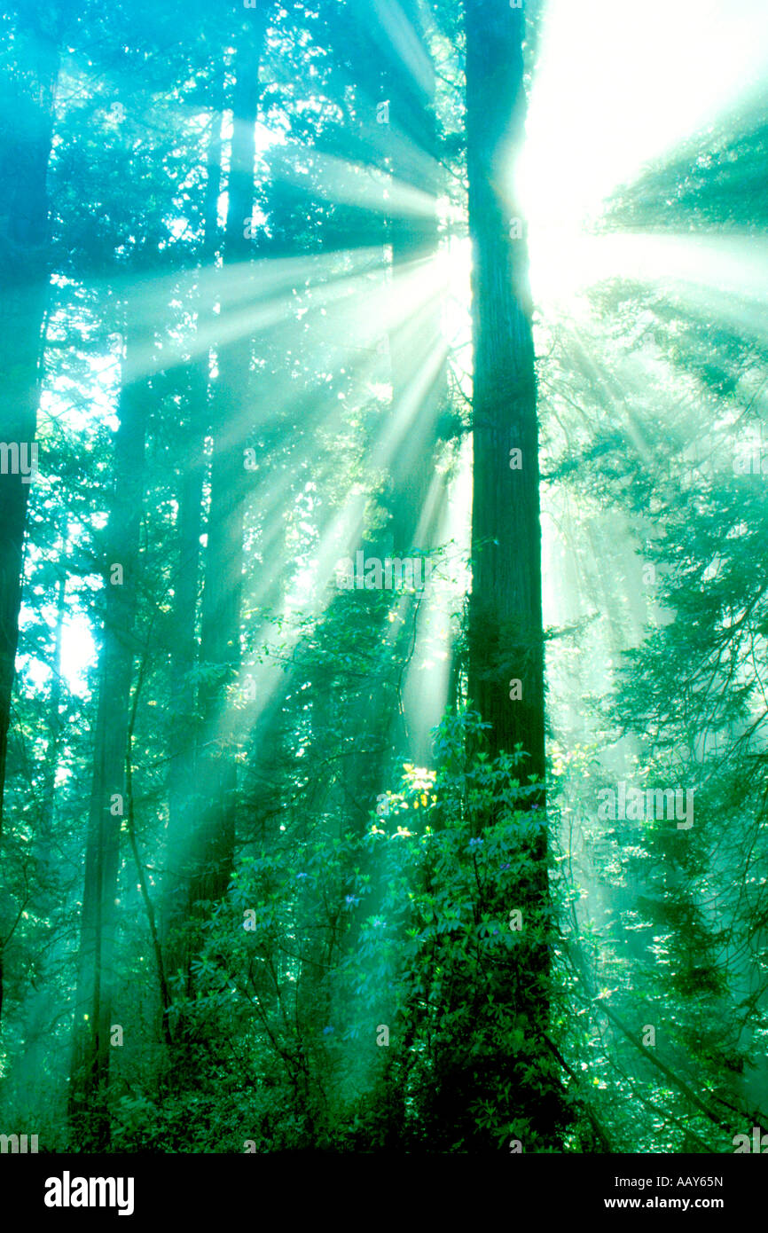 Sequoia - The Forgotten Link