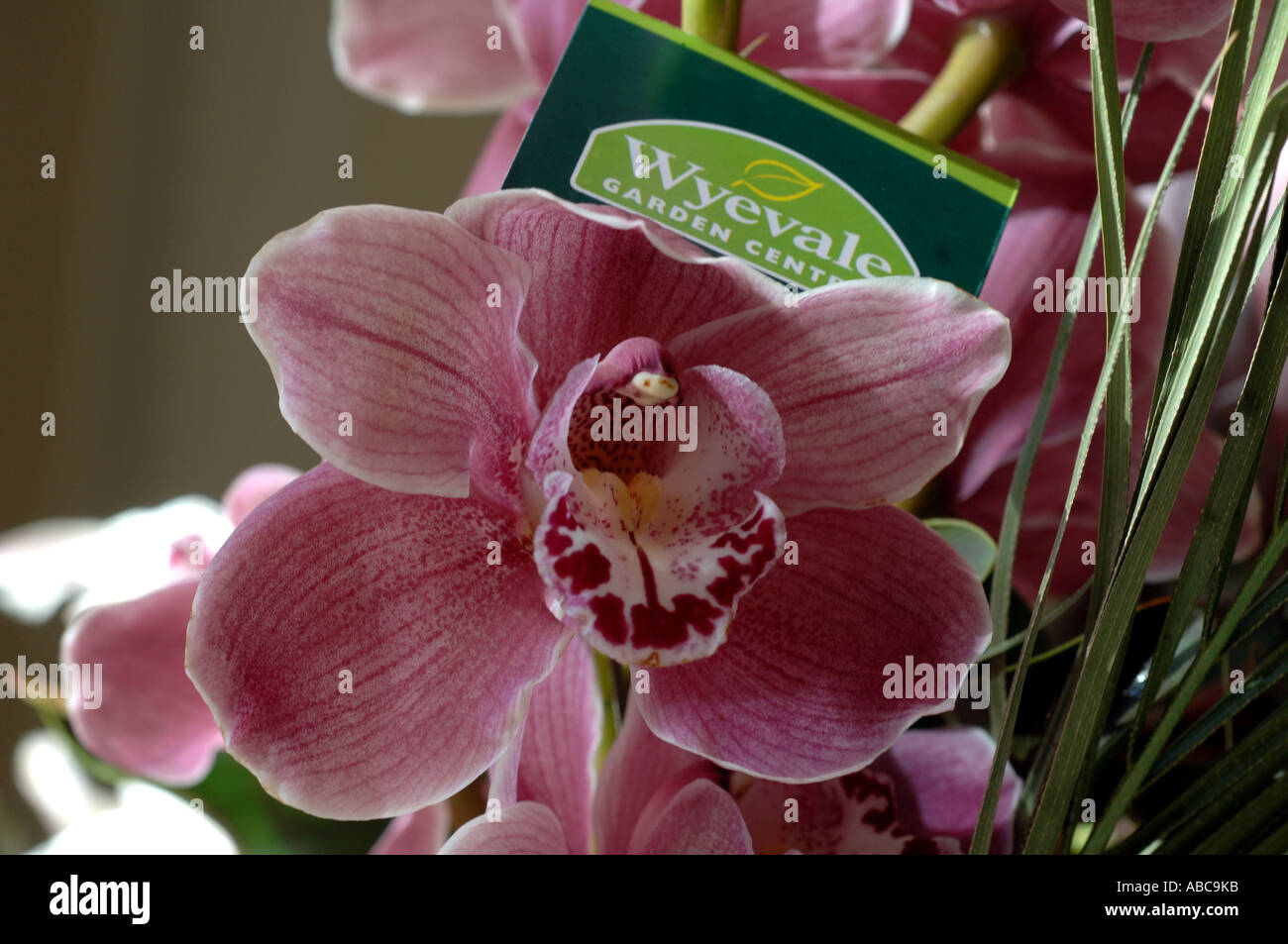 Remarkable A Wyevale Garden Centre Label Tag In A Collection Of Pink Orchids  With Glamorous A Wyevale Garden Centre Label Tag In A Collection Of Pink Orchids For Sale  In A Wyevale Garden Centre At Brighton With Cute Made To Measure Garden Sheds Also Fairy Houses For The Garden In Addition Garden Shoes Clogs And Plastic Garden Storage Shed As Well As Solar Lights For Garden Shed Additionally Moss End Garden Centre From Alamycom With   Glamorous A Wyevale Garden Centre Label Tag In A Collection Of Pink Orchids  With Cute A Wyevale Garden Centre Label Tag In A Collection Of Pink Orchids For Sale  In A Wyevale Garden Centre At Brighton And Remarkable Made To Measure Garden Sheds Also Fairy Houses For The Garden In Addition Garden Shoes Clogs From Alamycom