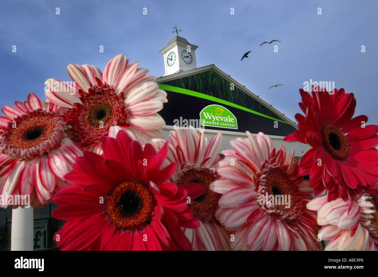 Ravishing A Crow And Two Seagulls Fly Over Wyevale Garden Centre At Brighton  With Foxy A Crow And Two Seagulls Fly Over Wyevale Garden Centre At Brighton Seen  Through A Bunch Of Gerbera With Cool Bog Garden Plants Uk Also Crescent Garden House Whitby In Addition Spring Gardens Medical Centre And Parking Hatton Garden As Well As Small Garden Pools Additionally Harrods Garden Centre From Alamycom With   Foxy A Crow And Two Seagulls Fly Over Wyevale Garden Centre At Brighton  With Cool A Crow And Two Seagulls Fly Over Wyevale Garden Centre At Brighton Seen  Through A Bunch Of Gerbera And Ravishing Bog Garden Plants Uk Also Crescent Garden House Whitby In Addition Spring Gardens Medical Centre From Alamycom