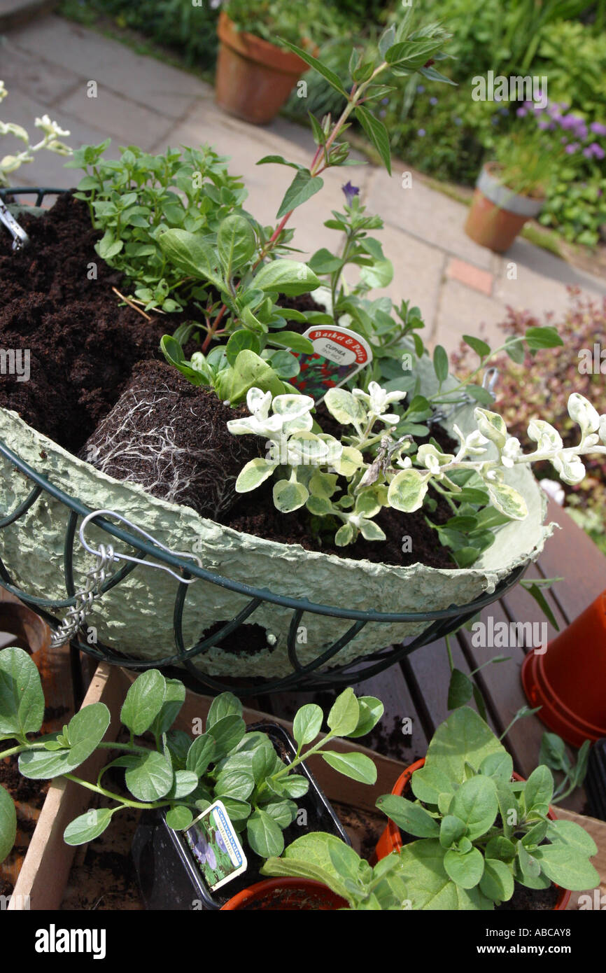 How to make hanging baskets - Hanging Basket Arranging Plants And Flowers To Make A New Hanging Basket