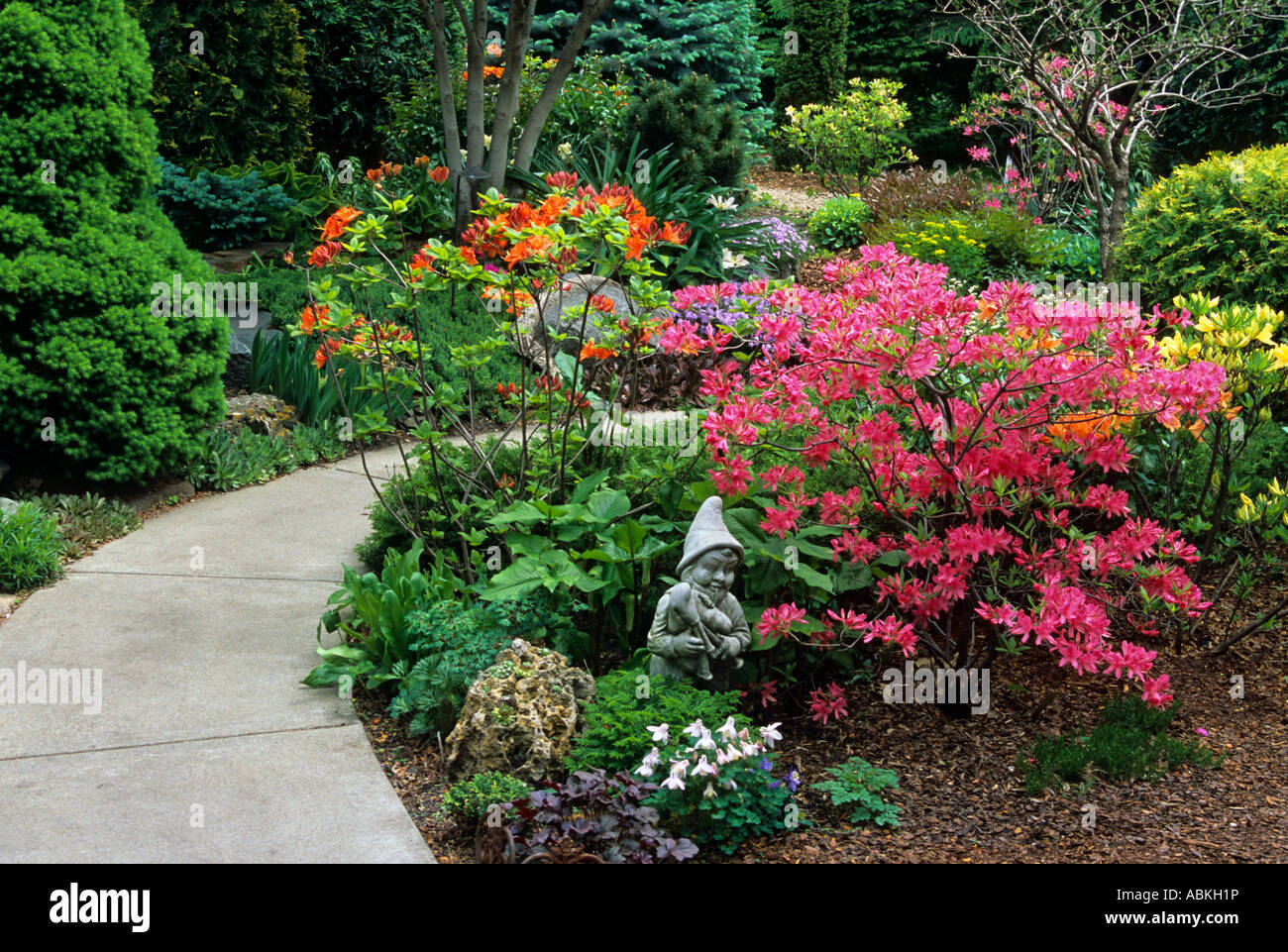 HOME GARDEN IN MINNEAPOLIS, MINNESOTA WITH BLOOMING RHODODENDRONS. MAY.  AMERICA.