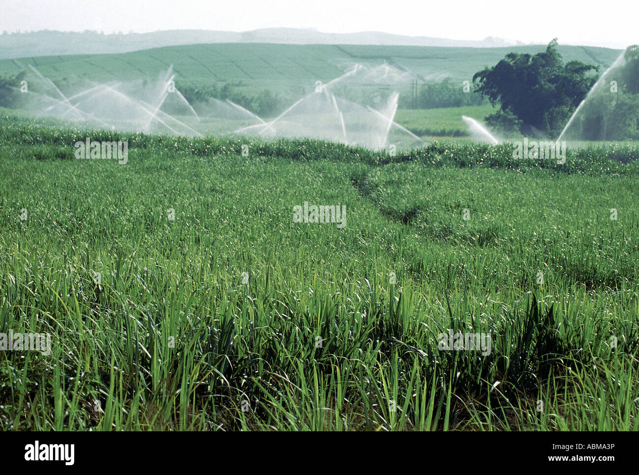 crop farming in south africa pdf
