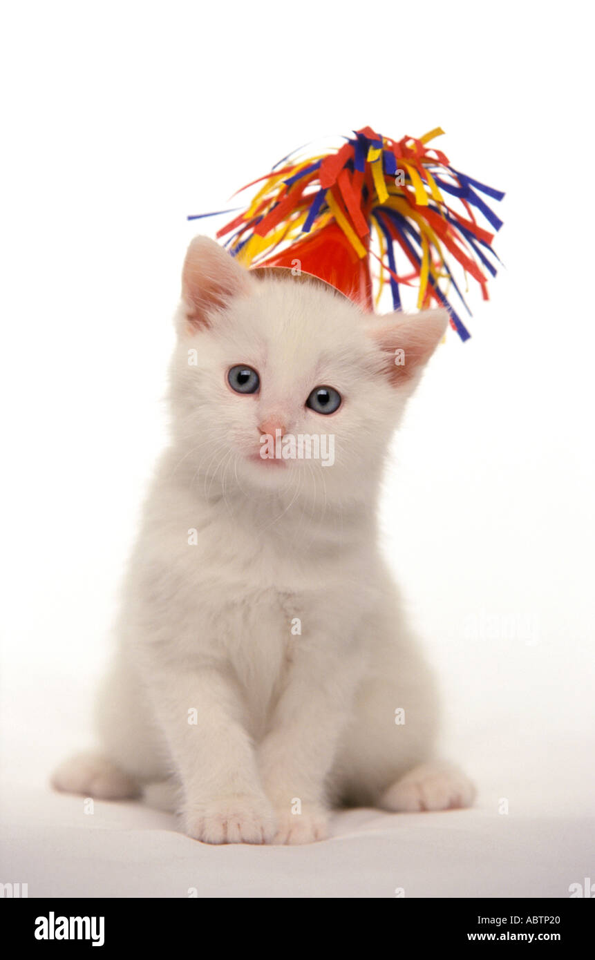 White kitten with party hat Stock Photo, Royalty Free ...