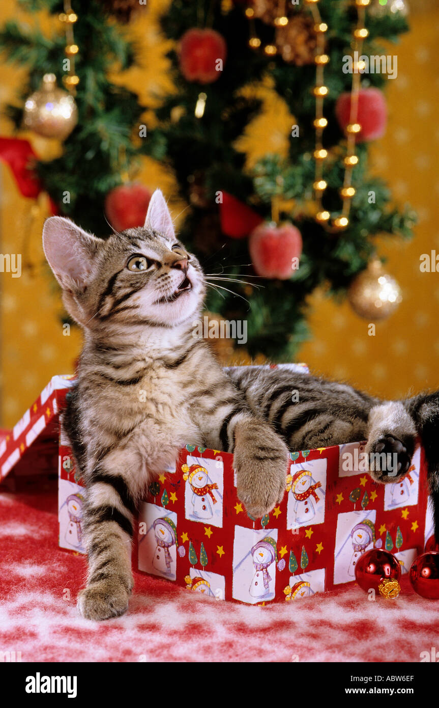 cat kitten as Christmas present under Christmas tree Stock Photo ...
