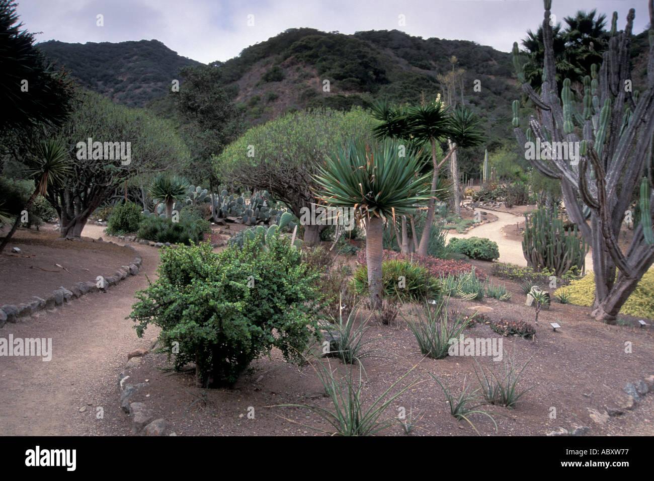 Botanical gardens catalina garden ftempo for Wrigley memorial botanic garden