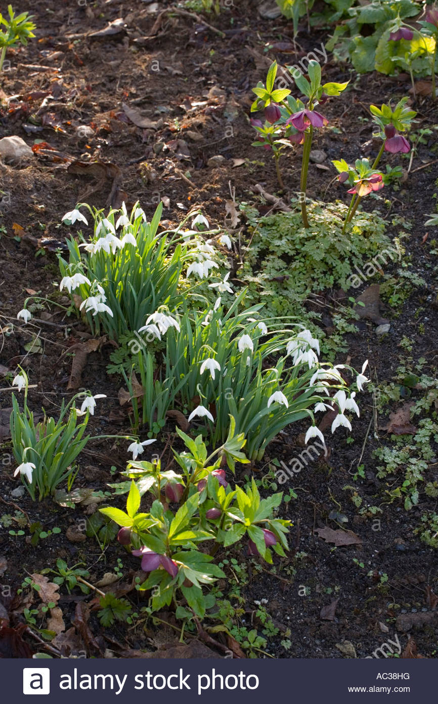 the garden house devon uk spring the bulb meadow with drifts of