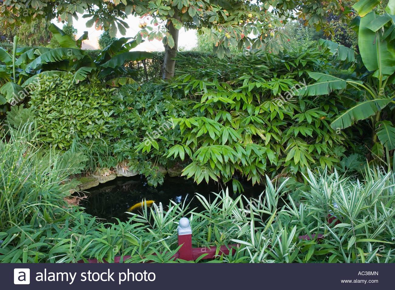 Beechwell garden tim wilmot bristol uk exotic town garden for Plants around garden pond