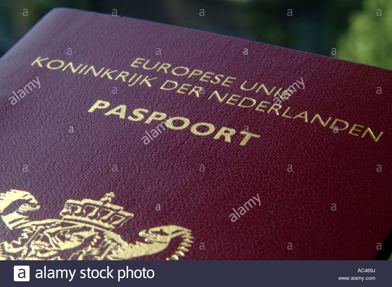 Dutch passport cover stock photo royalty free image 13035341 alamy dutch passport cover ccuart Choice Image