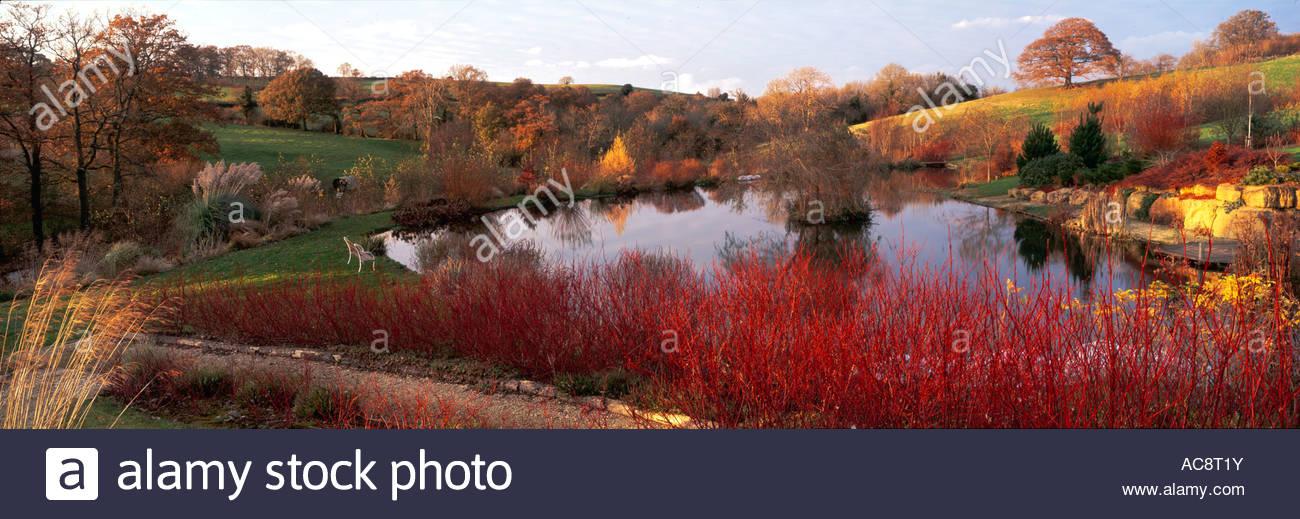 Cornus stems ornamental grasses lawn large ponds woodland for Ornamental grasses for ponds