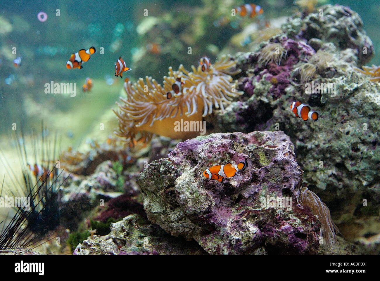Fish aquarium tank animal fishes freshwater aquaria for Fancy fish tanks