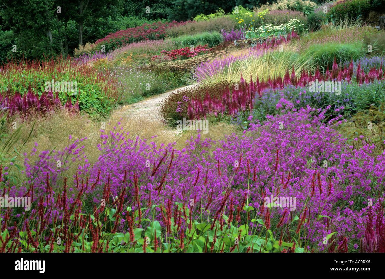 Pensthorpe Millennium Garden Norfolk Lythrum Persicaria