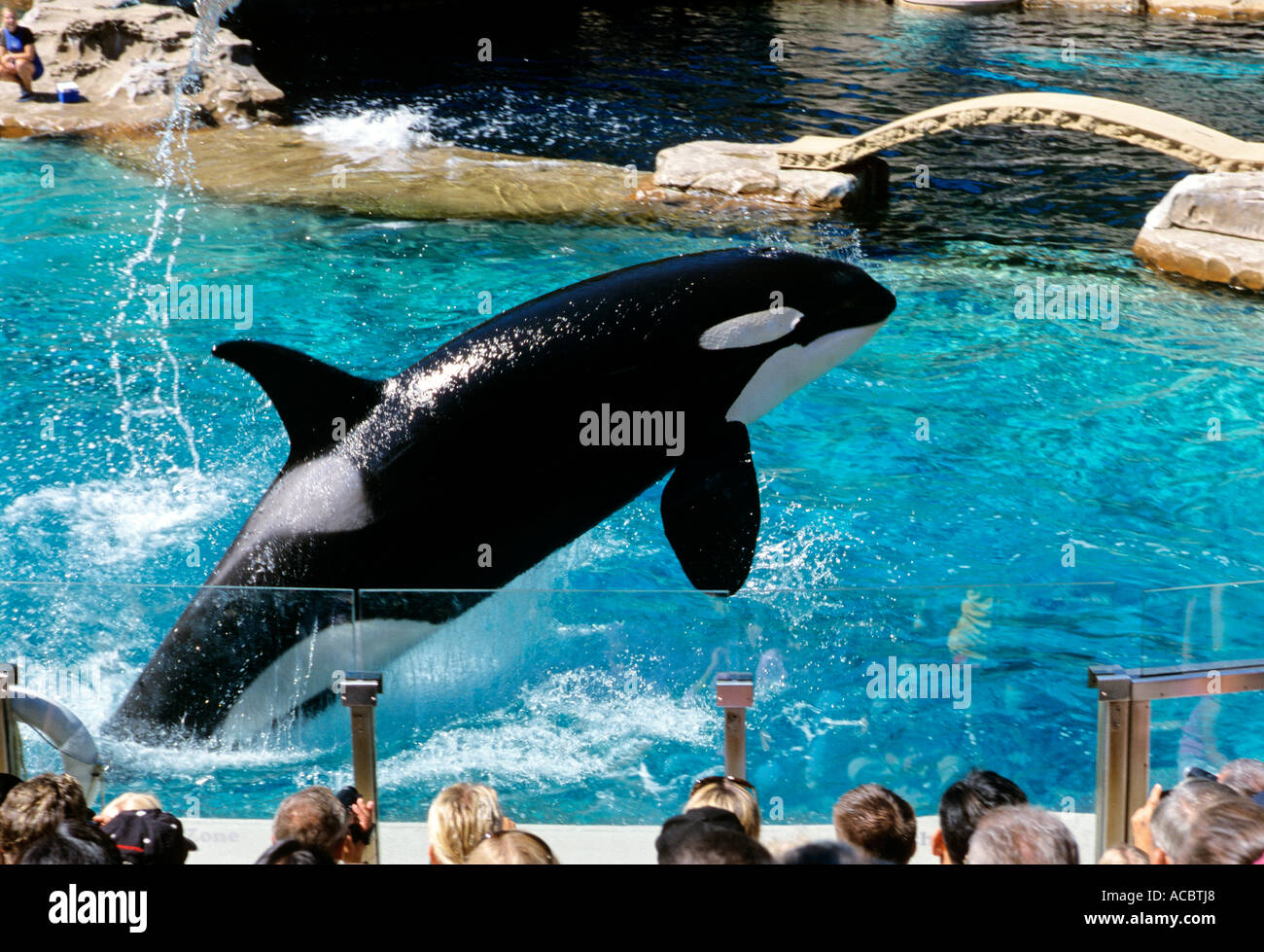 Zoo Whale Related Keywords & Suggestions - Zoo Whale Long Tail ...