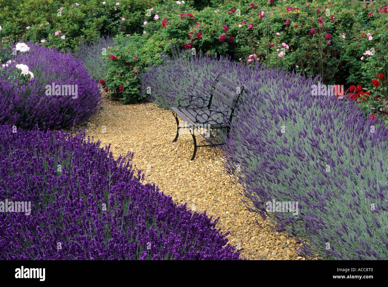 Lavandula Angustifolia U0027Imperial Gemu0027 And Lavandula Angustifolia U0027Sawyersu0027,  Garden Bench, Furniture, Roses, Gravel Path